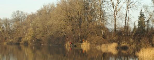 Auwald am Alten Rhein in Hohenems