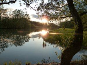 Sonnenuntergang Rheinholz