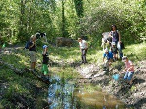 Kleintierjagd bei den Tümpeln im Rheinholz