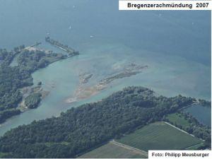 Die Bregenzerachmündung (Natura 2000 Gebiet) entwickelt sich langsam wieder zu einem natürlichen Delta.