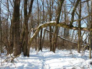 Winterliche Idylle im Auwald auf der Sandinsel