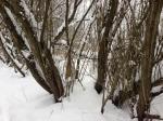 Bregenzerachmündung im Winter Foto: K Lins