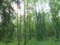 Rheinholz im Mai