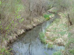 Ein typisches Element der Frastanzer Au sind die Grundwassergießen- wie der Name schon sagt. rein vom Grundwasser gespeist.