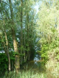 Spuren vom 100-jährigen Hochwasser.