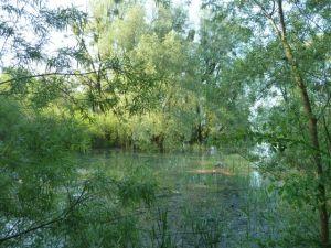 Weichholzau unter Wasser