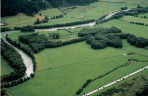 Biotop Ahrauen in Südtirol (Foto: Abt. Natur und Landschaft, Land Südtirol)