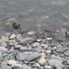 Flusskies