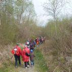Ein erholsamer Auwald-Spaziergang