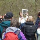 Die Ringelnatter (Bild oben) ist auf Wasser angewiesen und eine typische Schlangeart im Auwald
