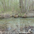 Vernetzung Wasser-Ufervegetation