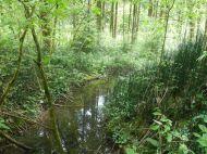 Kleiner Bach durch den Auwald mit Winter-Schachtelhalm am Ufer.