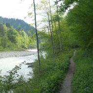 So eng schlängelt sich der Fußweg an der Bregenzerach entlang durch das Schutzgebiet.