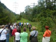 Markus Grabher erzählt von invasiven Neophyten im Auwald wie z.B. das Indische Springkraut