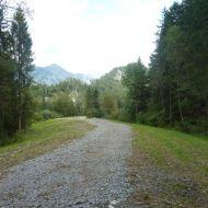Hochwasserschutzdamm in Lorüns. Auwald dient als Retentionsraum.