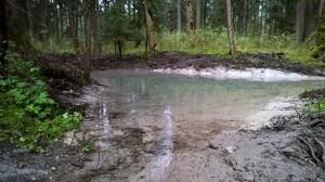 Amphibientümpel Bludescher Au (Foto: Walter Amann, Agrar Bludesch)