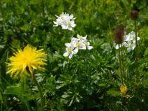 Artenvielfalt Magerwiese